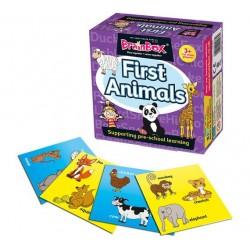 First Animals - Brainbox